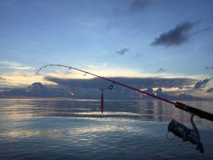 Zeevissen Egmond aan Zee