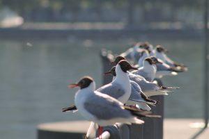 Vogelspotten Egmond aan Zee